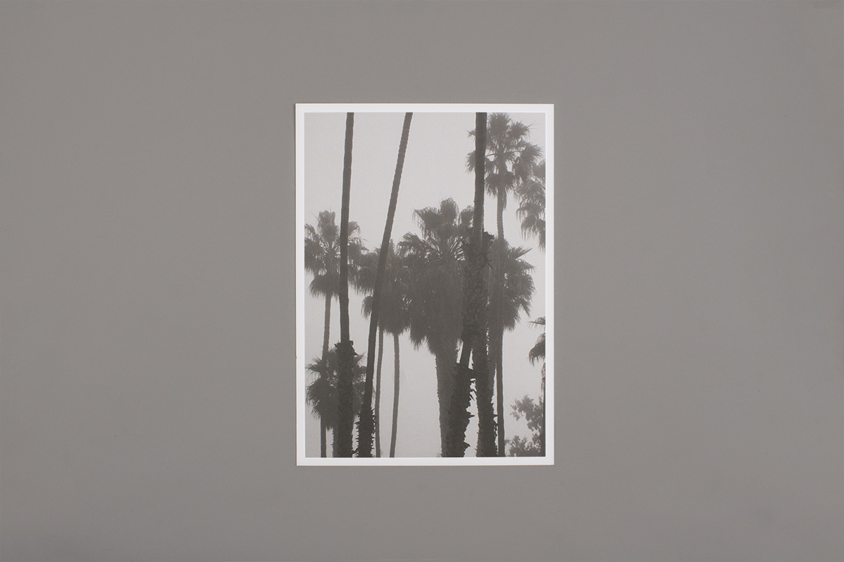 Zin Taylor: Living systems, narrative haze (a sequence of palm trees obscured by the fog)